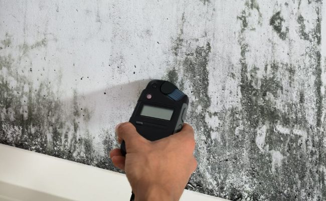 Image Mold-Detection_2