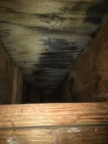 Mold Remediation in Glastonbury, CT (1)