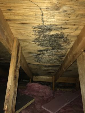 Mold Removal in Fairfield CT after Water Damage from Burst Pipes (2)