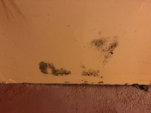 Mold Removal Bridgeport CT (6)