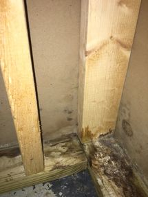 Water Damage & Mold Removal in Monroe CT (4)