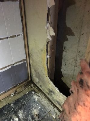 Mold Removal Norwich CT (3)