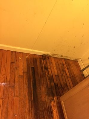 Odor Removal Guilford CT (1)
