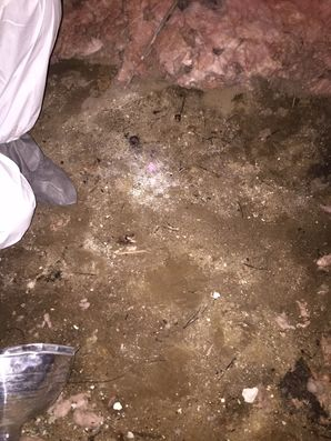 Mold Removal & Crawl Space Cleaning in Stratford CT (3)