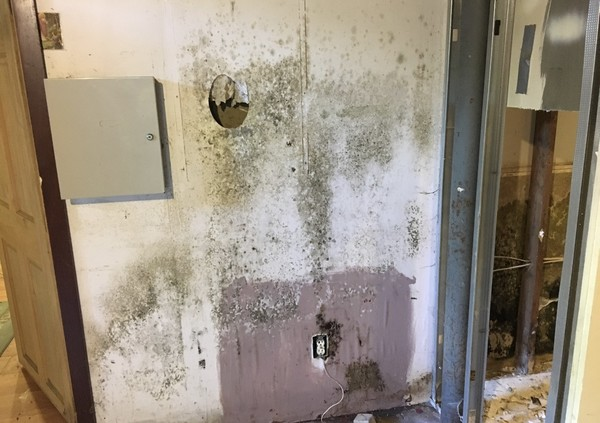 Mold Removal in Newington, CT (3)