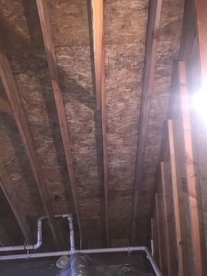 Mold Removal in New Haven, CT (6)